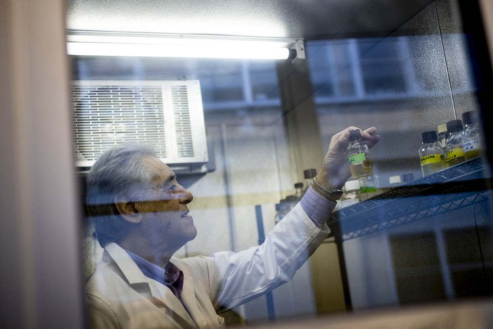 A researcher in a white lab coat examines a petri dish.